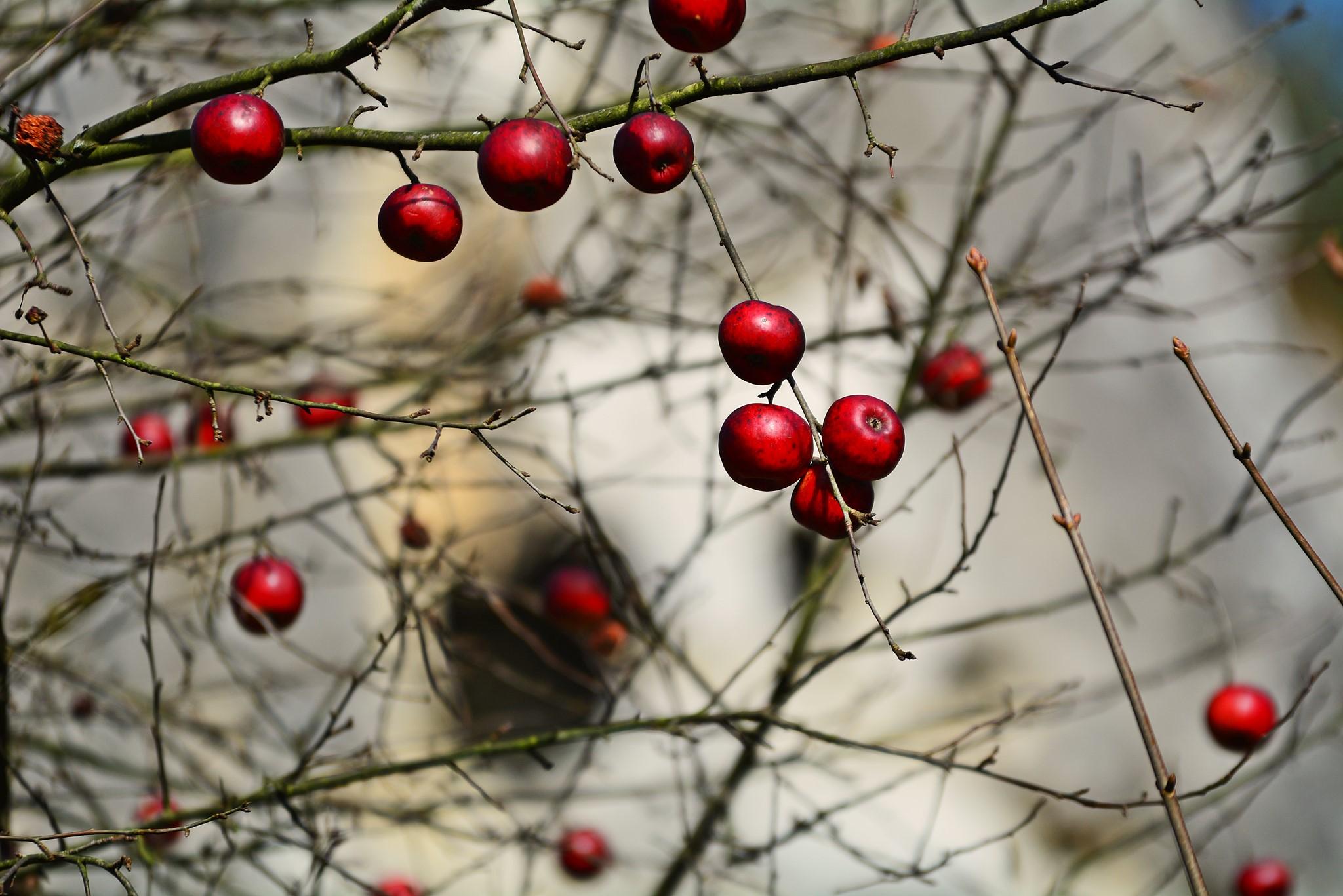 Jabłka w Dolinie Kobylańskiej